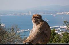 Gibraltar-Abdeckung Lizenzfreie Stockfotografie