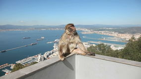 Gibraltar-Affe stock video footage
