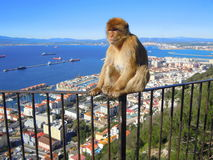 Monkey sitting on metal railings Royalty Free Stock Photography