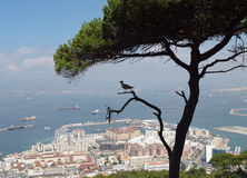 Gibraltar and bird silhouette stock images