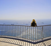 Gibraltar monkey Royalty Free Stock Image
