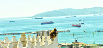 Gibraltar is the monkey for the protection of Europe. Unusual placement of a baboon that seems to want to protect the European coasts from the invasion observed stock photography