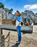 Gibraltar. Monkeys royalty free stock image
