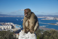 Gibraltar, points of interest in the British overseas area on the southern spit of the Iberian Peninsula,. Gibraltar, monkey rock, a Berber monkey sits stock photos