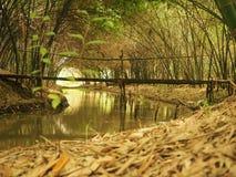 Gibusu bambusa ogródu tunel obraz royalty free