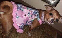 Gidgette που ντύνεται επάνω στοκ εικόνες με δικαίωμα ελεύθερης χρήσης