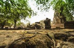 Gids voor Si Ayutthaya van Phra Nakhon Stock Fotografie