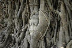 Gids voor Si Ayutthaya van Phra Nakhon Royalty-vrije Stock Fotografie
