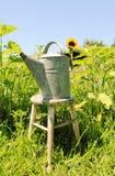 Gießkanne auf einem Sonnenblumengebiet Stockbild