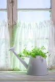 Gießkanne, die in einem sonnigen Fenster mit Kräutern steht Stockfoto