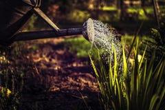 Gießkanne im Garten stockbild