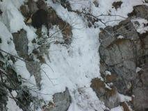 Giemza w Alps Obraz Stock