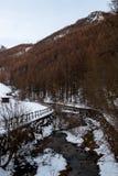 Giemzowy potok, giemza, Włochy zdjęcie stock