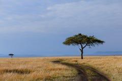 Gier in Masai Mara Kenya stock foto's