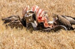 Gieren, Ngorongoro-Krater Stock Afbeeldingen