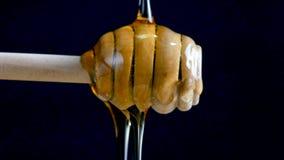 Gietende honing aan een dripper stok tegen de zwarte achtergrond stock videobeelden