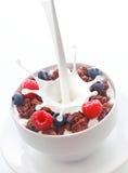 Gietende melk in ontbijtgraangewas met bessen Royalty-vrije Stock Afbeeldingen
