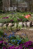 Gieter in de tuin stock foto