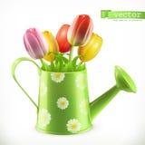 Gieter en een boeket van tulpen, het vectorpictogram van de lentebloemen Stock Foto