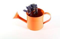 Gieter met bloemen Stock Foto