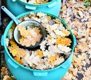 Gietlepel in vat met water en eiken bladeren Royalty-vrije Stock Afbeelding