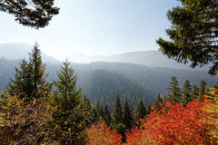 Gifford Pinchot National Forest Stock Image