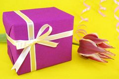Gift. Purple gift and a tulip on a yellow background Royalty Free Stock Photo