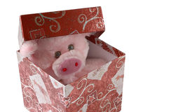 A gift. With a pig Royalty Free Stock Photo