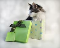 The gift. A tiny kitten in a gift box Royalty Free Stock Image