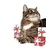 Gift & kat Royalty-vrije Stock Foto's