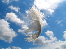 Gift of the Angel. Flying plumelet of a swan on a background of the sky which was dropped by a sparrow Royalty Free Stock Photography