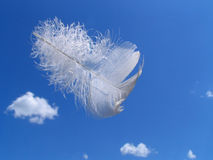 Gift of the Angel. The plumelet flies from heavens Stock Image