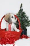 Gift Basket Shih Tzu Stock Image