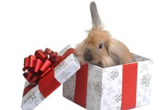 Gift in  box Stock Images