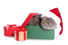 Gift box with cute cat in Santa hat. On white background royalty free stock photo