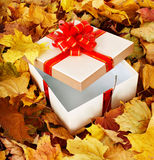 Gift box in fall foliage. Stock Photos