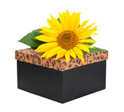 Gift box with flower Royalty Free Stock Photography