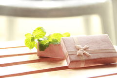 Gift box with fresh mint Stock Photography