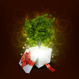 Gift box with magical green tree Stock Images