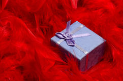 Gift box between red feathers Royalty Free Stock Photos