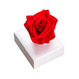 Gift box with red rose. Isolated over white Stock Photography