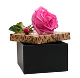 Gift box with a rose Royalty Free Stock Photos