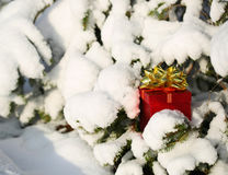 Gift Box under Christmas tree covered with Snow. Outdoor. Winter Stock Image