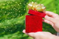 Gift box in woman's hands Royalty Free Stock Photo