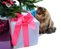 Gift boxes and cat Royalty Free Stock Photo