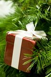 Gift on branch Stock Image