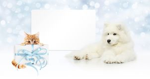 Gift card, dog and cat with package on christmas lights backgrou. Nd, banner copy space template Stock Images