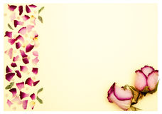 Gift card on dried rose Royalty Free Stock Image