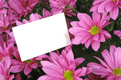 Gift card and flowers. A bouquet of purple flowers with a gift card Stock Photography