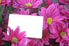 Gift card and flowers. A bouquet of purple flowers with a gift card Royalty Free Stock Images